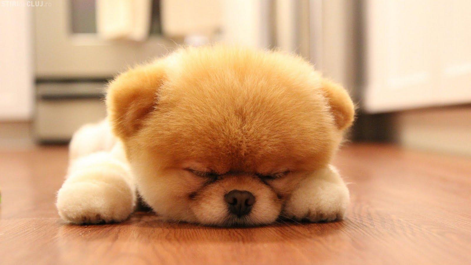 Fenton Chiropractor Sleep